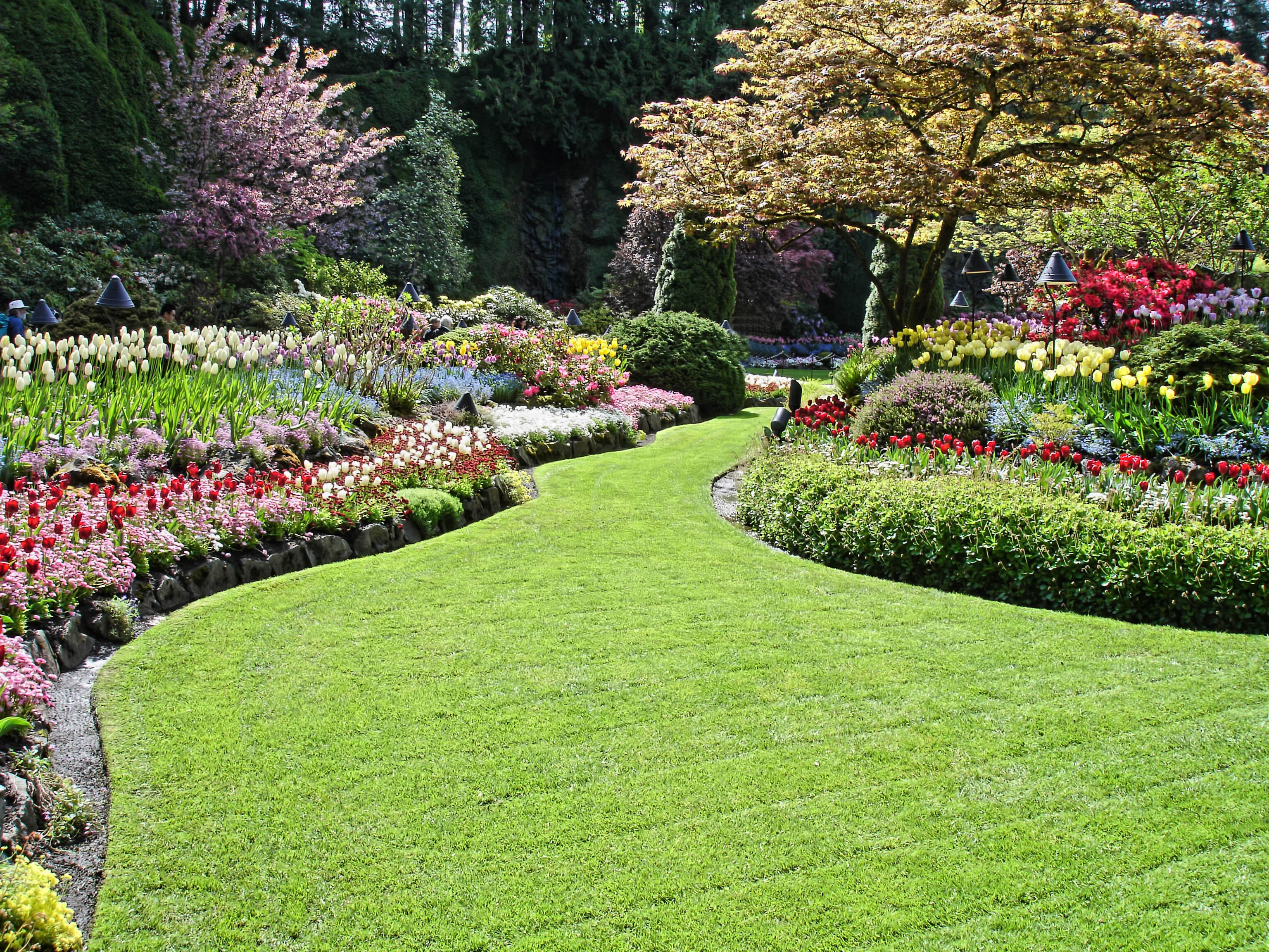 Landscape Maintenance New Life Outdoors Landscape Company